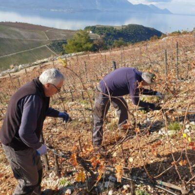 zimska rezidba vinove loze
